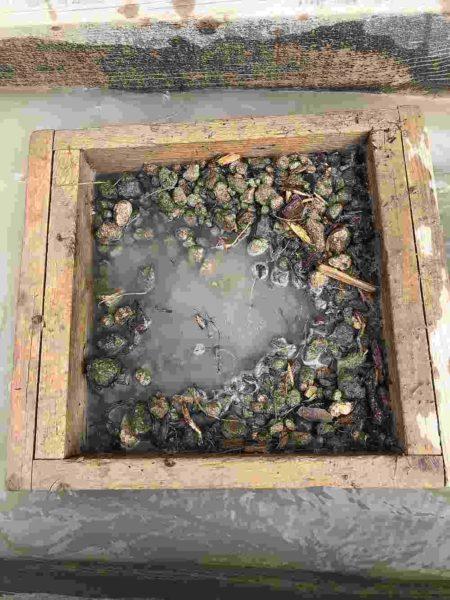 Rock Creek Sapphire Gravel 5 Pack